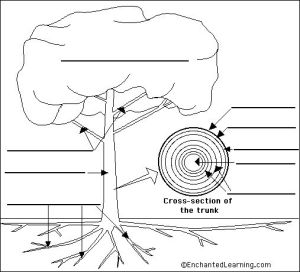 Tree anatomy printable   Trees  Books Crafts   Pinterest
