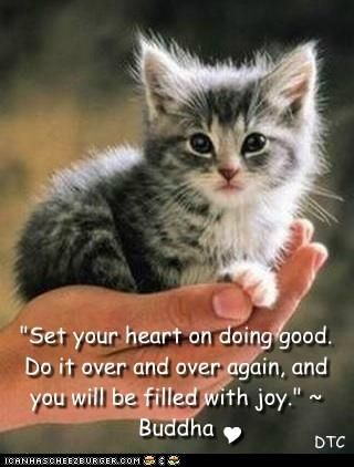 Buddha Quote And A Cute Kitty Words Of WisdomQuotes