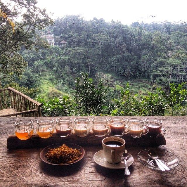 Bali pulina in Gianyar, Bali ( Coffee Plantation