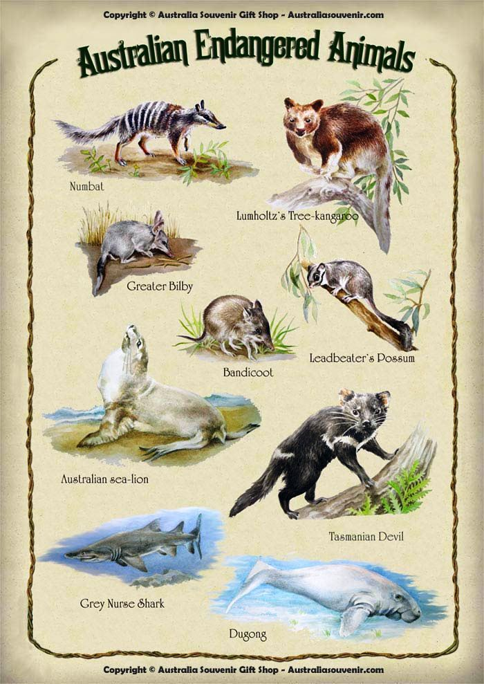 Australian Endangered Animals. The Australian government