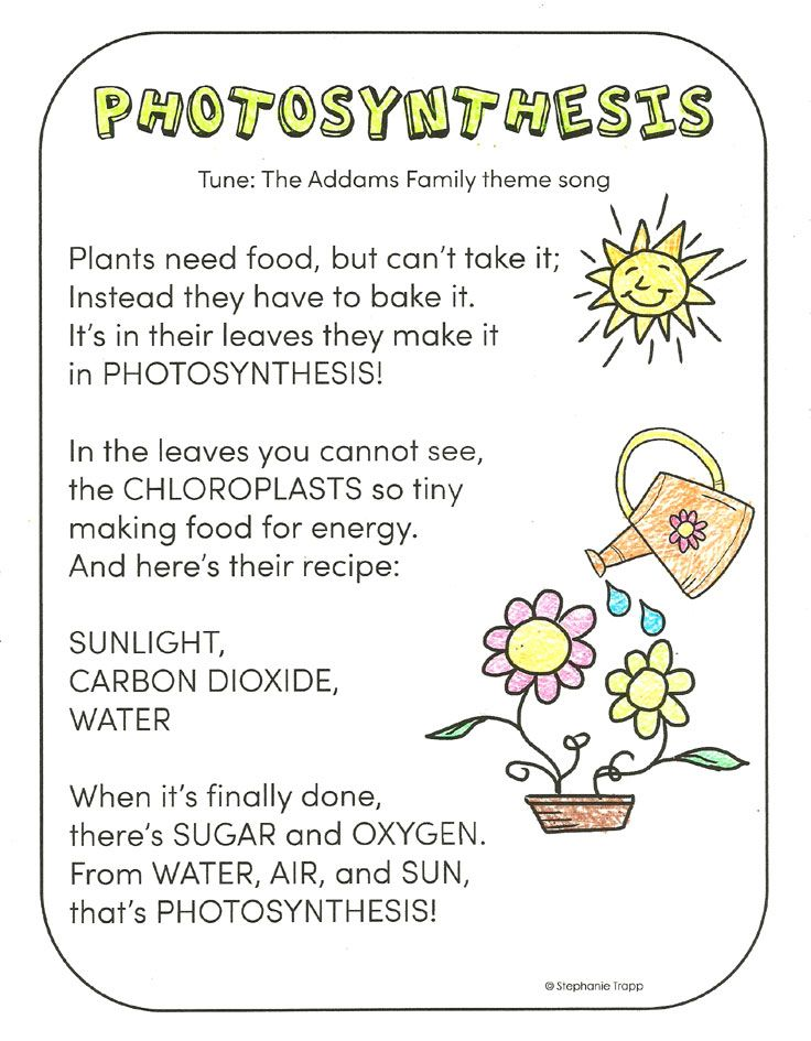 Photosynthesis for Kids Activities, Other and Photosynthesis