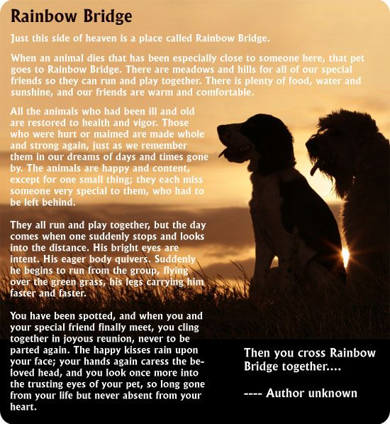 Rainbow Bridge – Latch Farm Studios rainbow bridge collection of fused glass – Read the 'Rainbow Bridge' story to understand why
