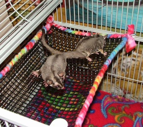 Suz' Sugar Gliders – No Sew Accessories-Can work for other pets too