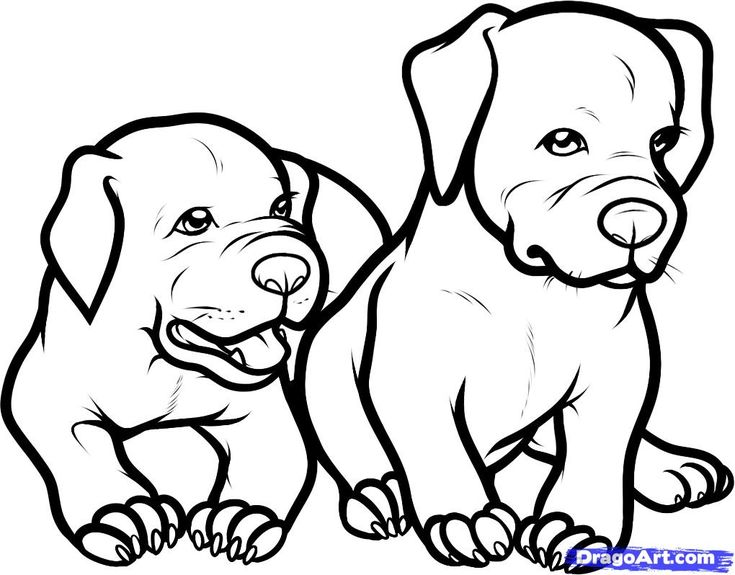 only pitbull how to draw pitbulls