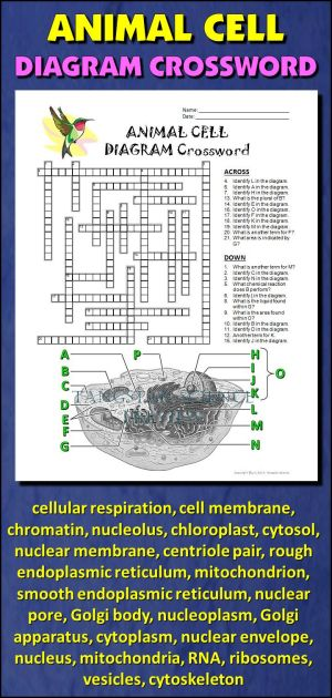 Animal Cell Crossword with Diagram {Editable} | Them, An