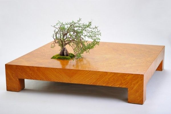 17 Best Images About Bonsai On Pinterest