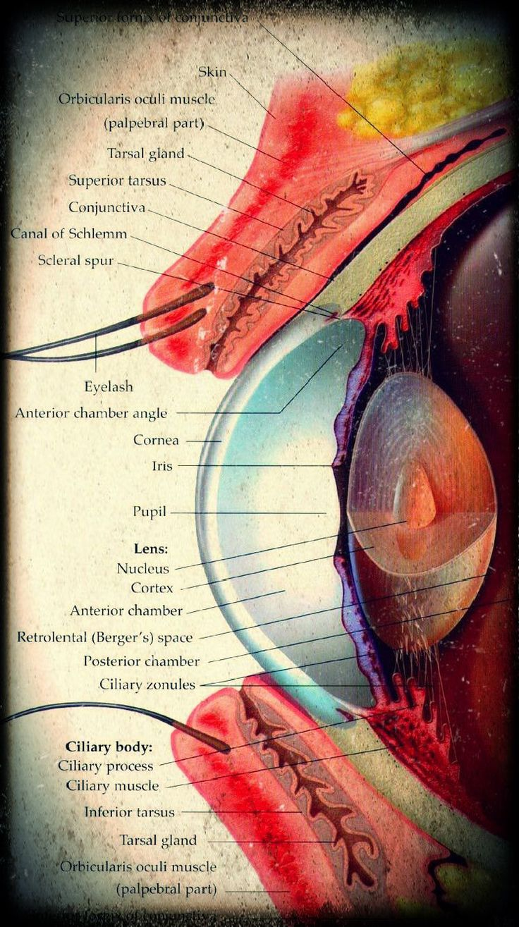 93 best Anatomy and Physiology images on Pinterest