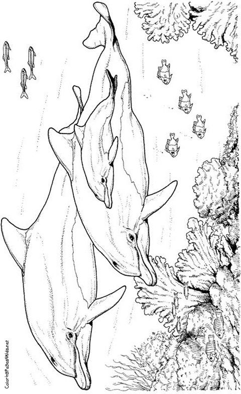 Dolphin Coloring Pages Coloring Pages For Kids