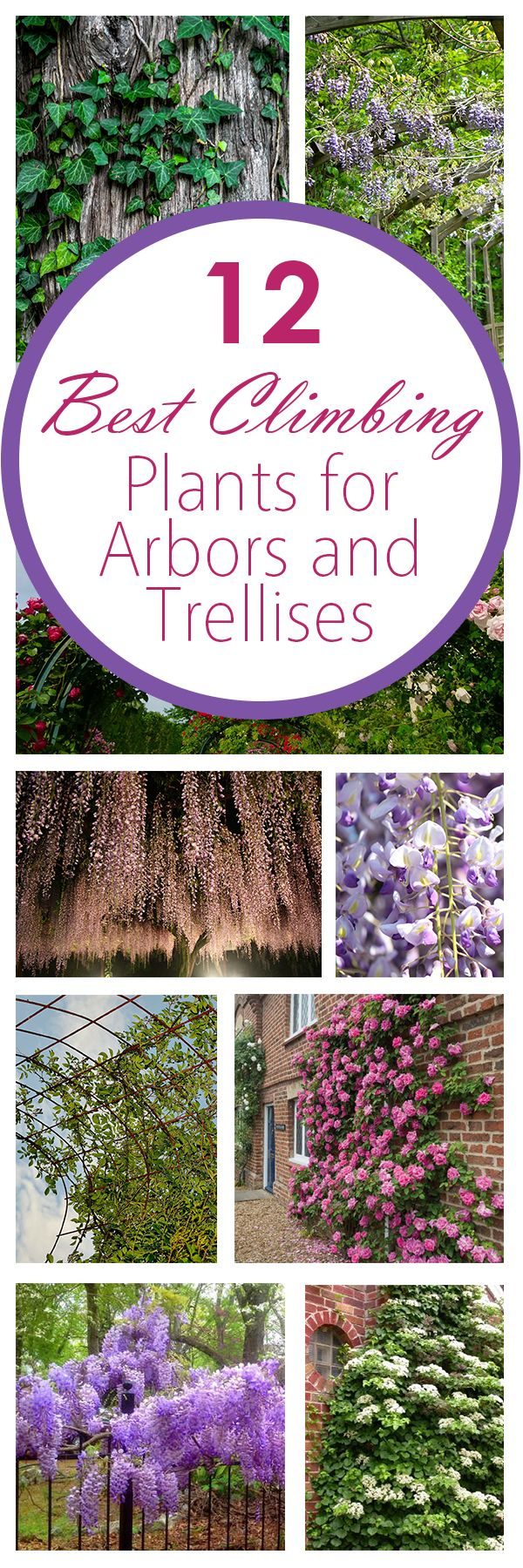 12 Best Climbing Plants for Arbors and Trellises. William – some great ideas for the condo after our wedding weddingmusicproje…