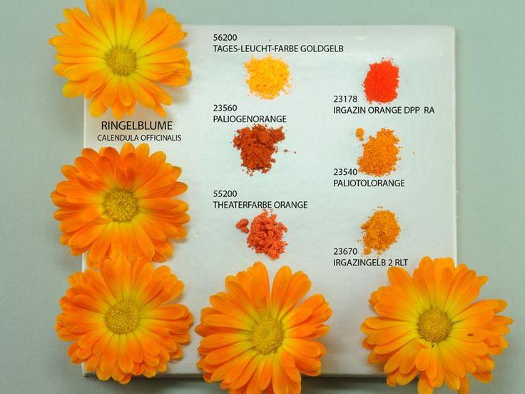 38 Best Images About Pigmentos Das Cores