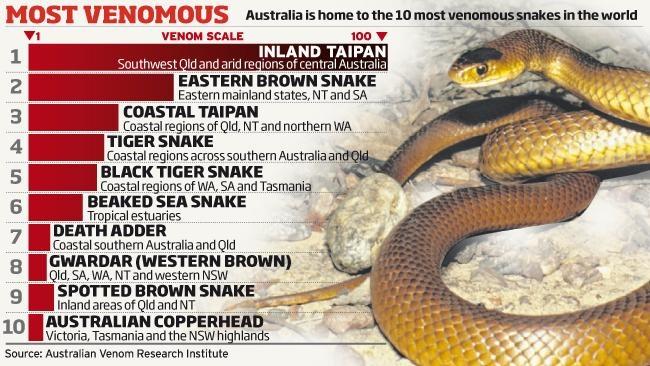 Australias most venemous snakes Snakes that I love