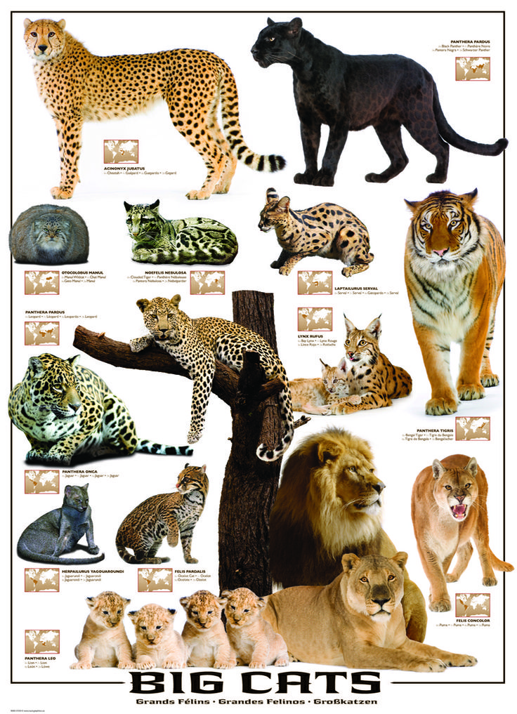 EuroGraphics Big Cats 1000Piece Puzzle. 13 species of the