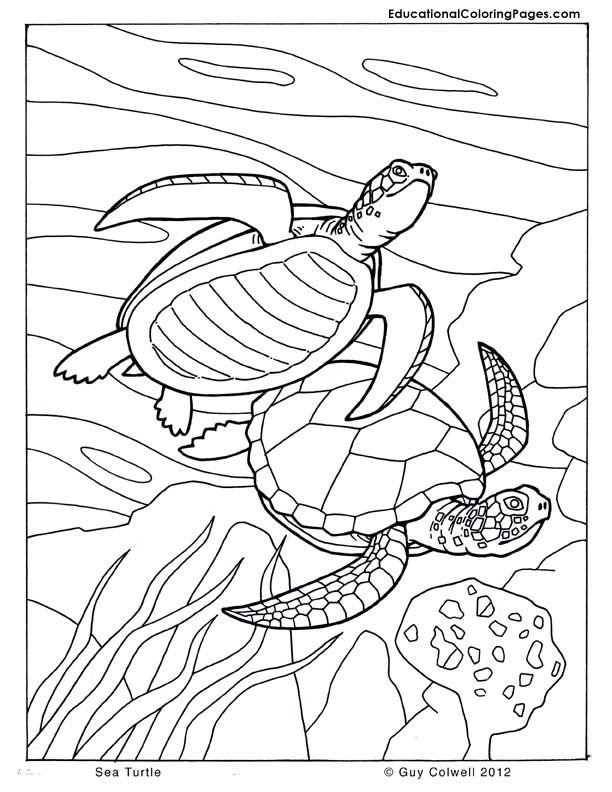 sea turtle coloring