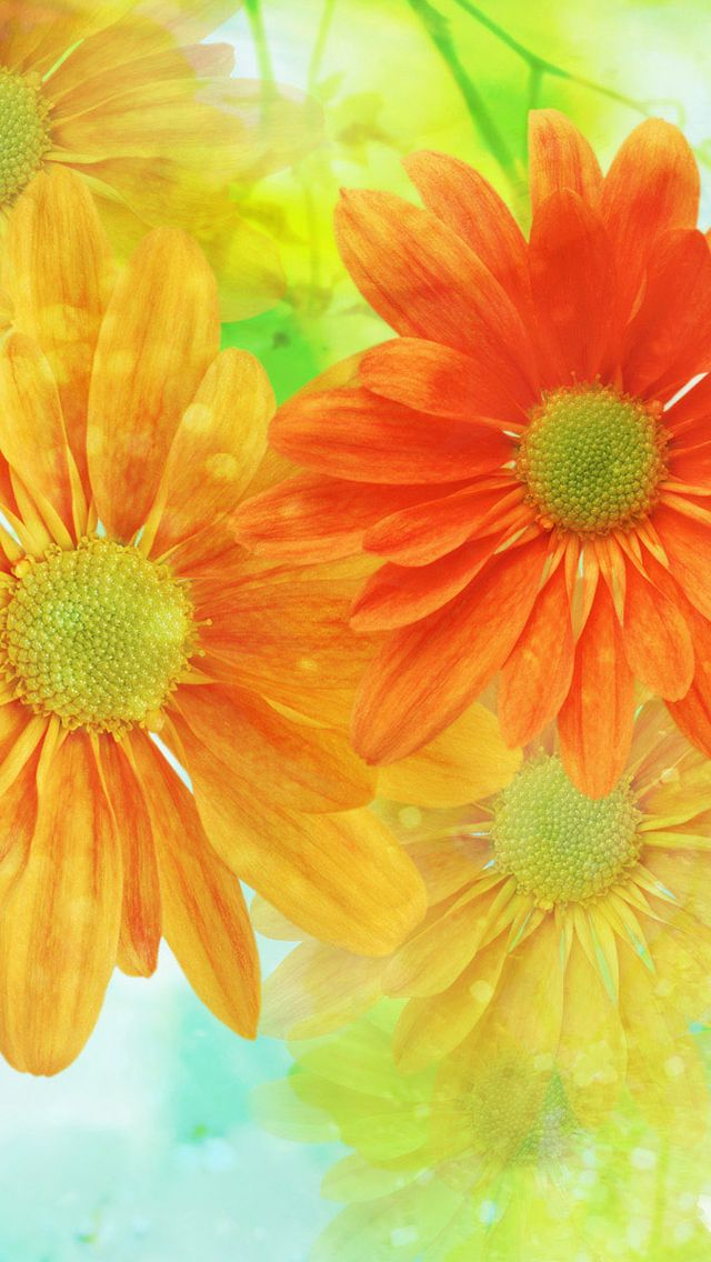 Orange & Yellow Spring Flowers iPhone Wallpaper Color