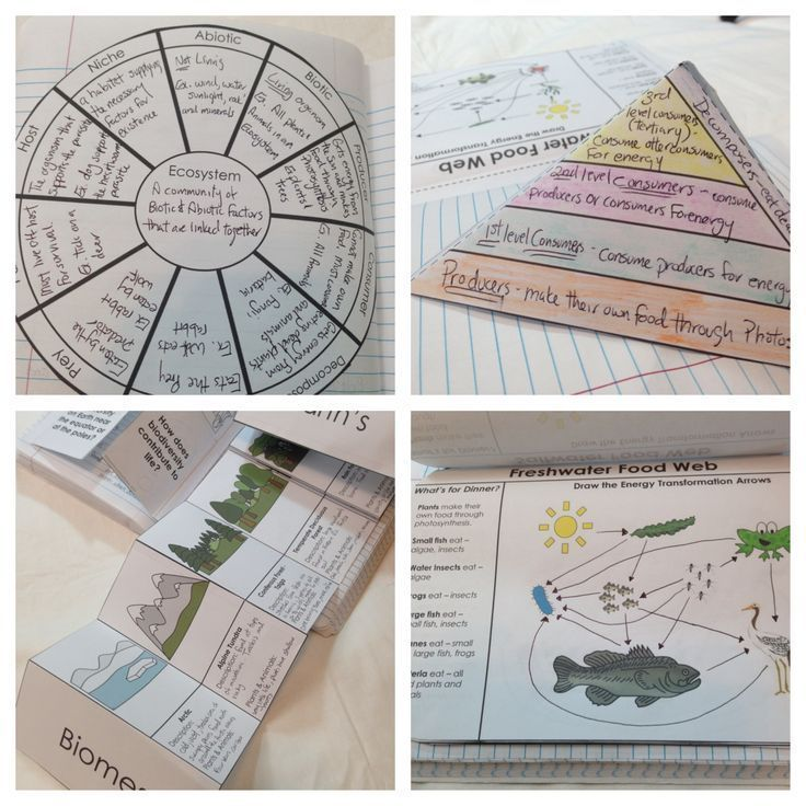 Ecosystems Interactive Notebook Pages Food chains, Food