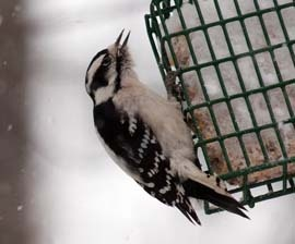 Get answers to your top questions about how and what to feed your backyard birds