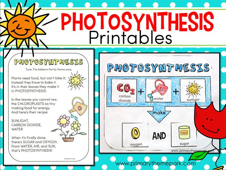 Photosynthesis for Kids Lesson plans, Videos and For kids