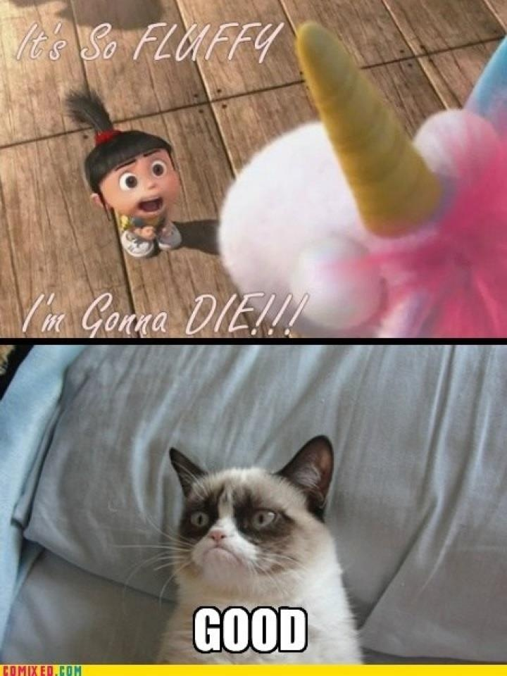 Grumpy cat ) Humor Pinterest Cats, Meme and Grumpy cat