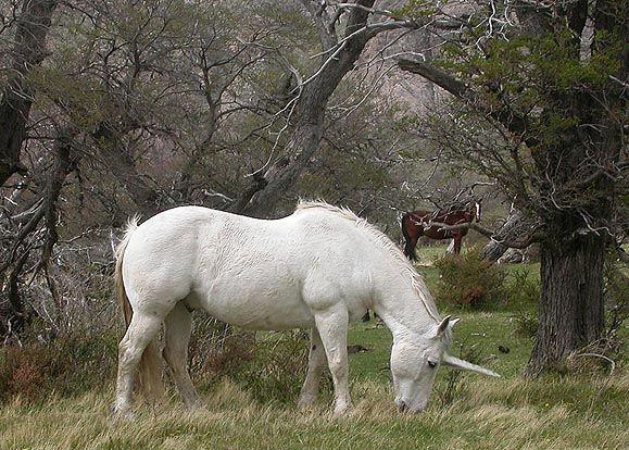 Rare Sighting Of The Patagonian Unicorn Unicornicus Patagonicus Unicorns Pinterest