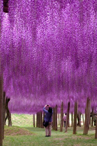 Fuji Park, Japan: