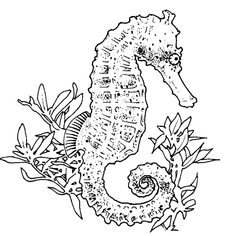 realistic seahorse coloring page Seahorses Pinterest