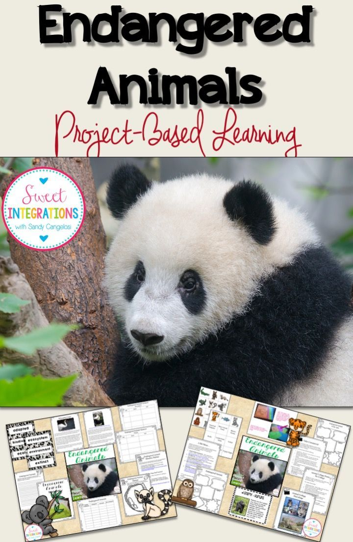 Project Based Learning Saving Our Endangered Animals