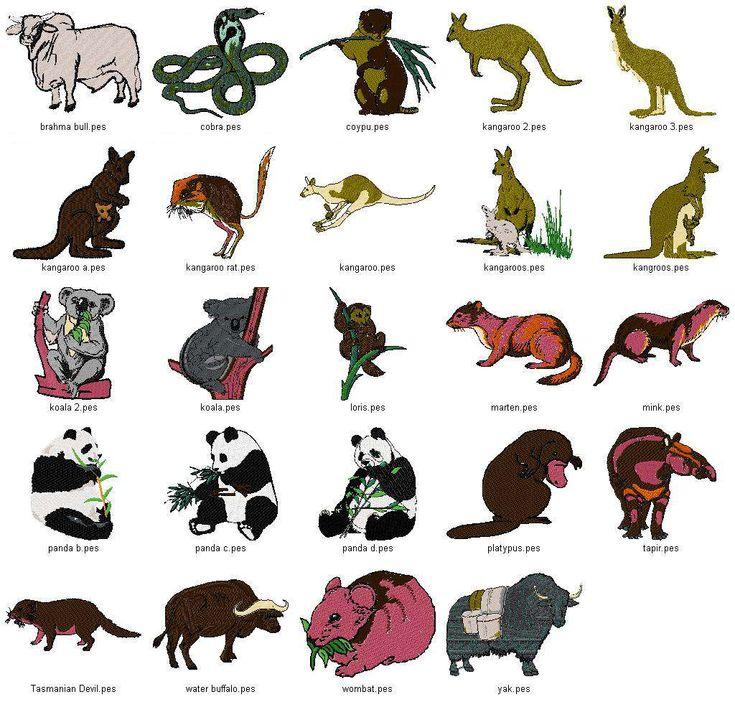 australian animals Google Search Australia Pinterest