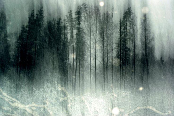 Haunted Forest Wallpaper Wallpapers Pinterest