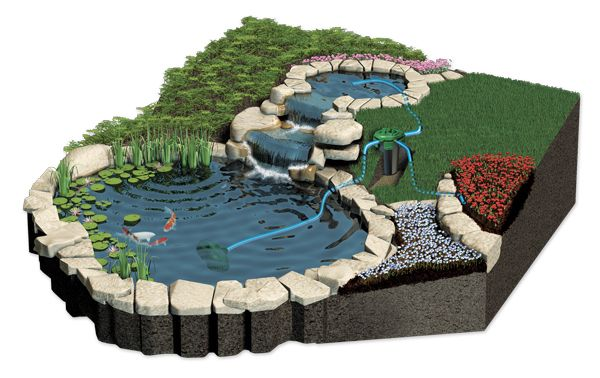 Water Filtering Plants Ponds