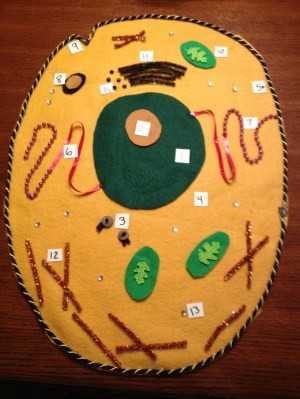 1000 images about Ideas & Cells on Pinterest | Cakes, Plant cell model and School science projects