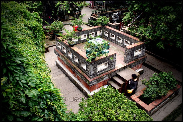 Chinese garden Garden/ backyard Pinterest Gardens