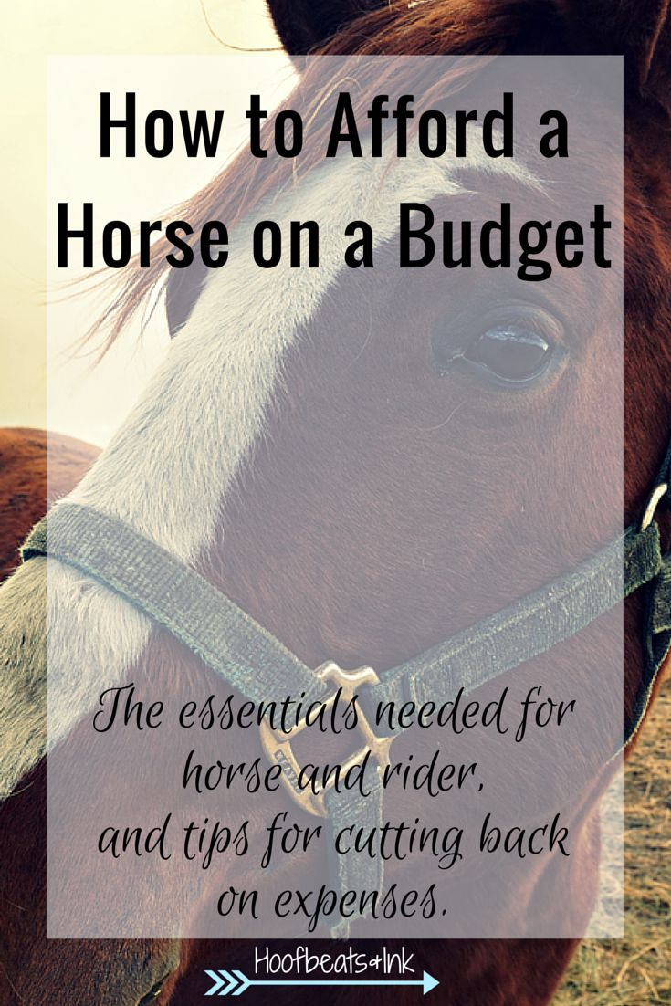 How to afford a horse on a budget. The essentials needed for horse and rider, and tips for cutting back on expenses. via Hoofbeats