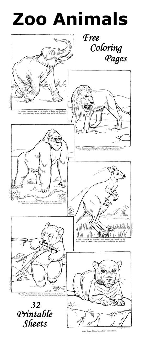 Zoo coloring pages Fun facts with each zoo animal