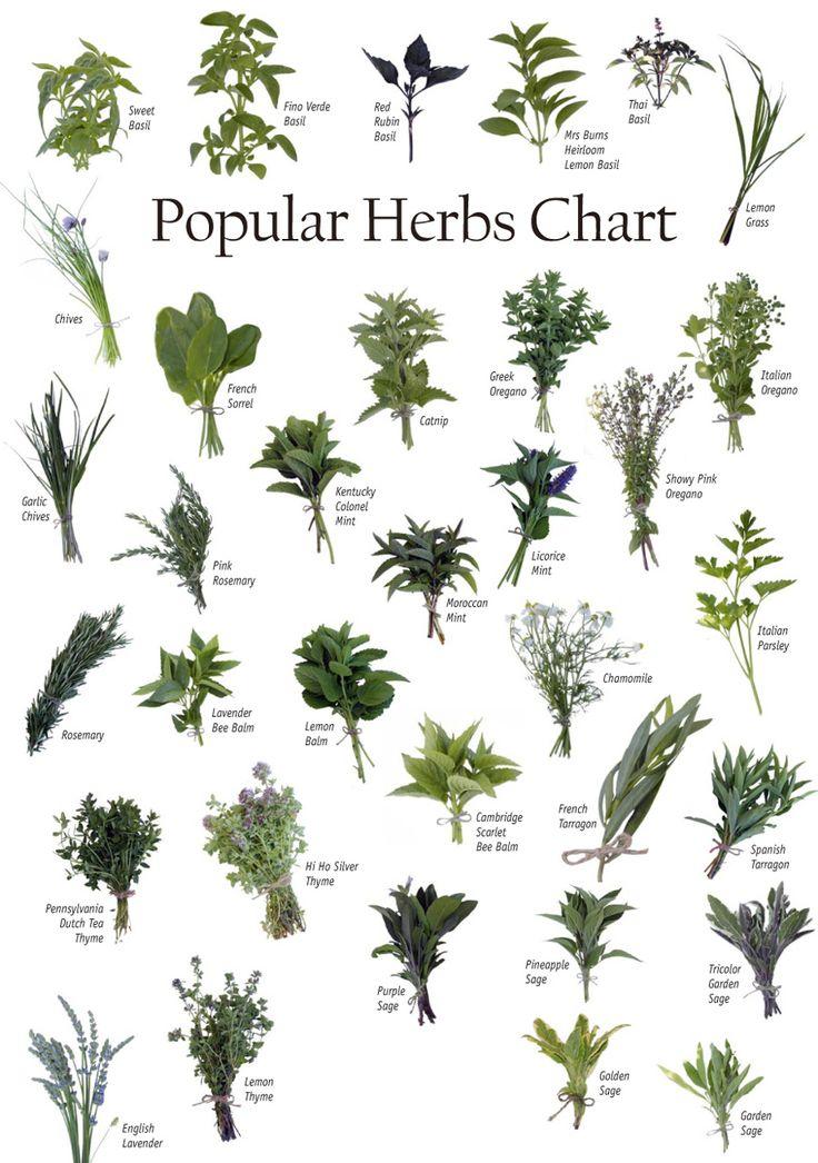 Herb chart Herbs Pinterest Gardens, Raising and