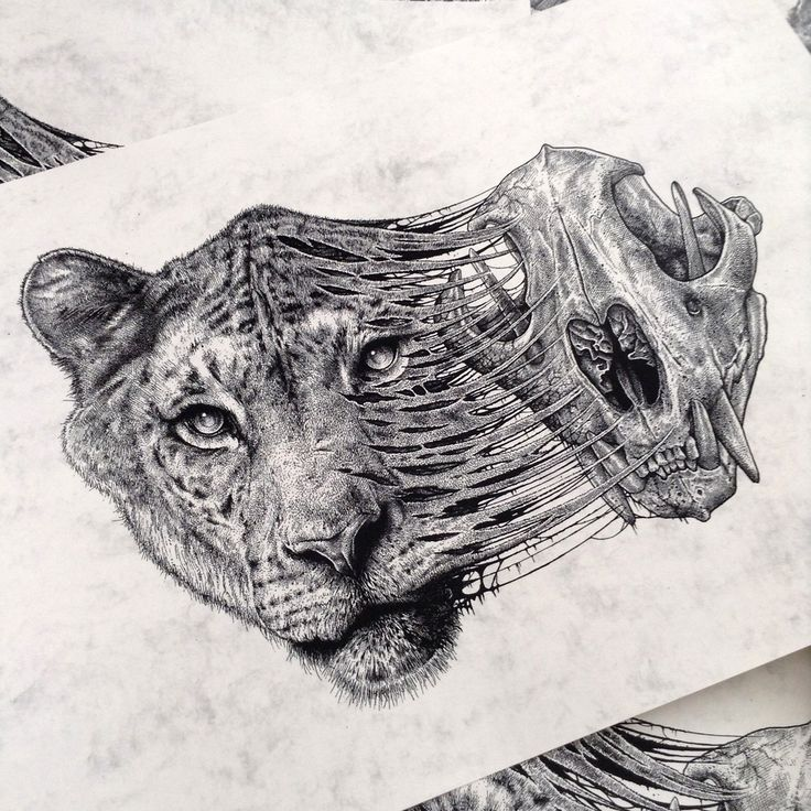 Lioness and Skull by Paul Jackson Anatomy Meets Design