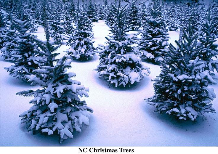 Christmas Tree Farms Boone Nc