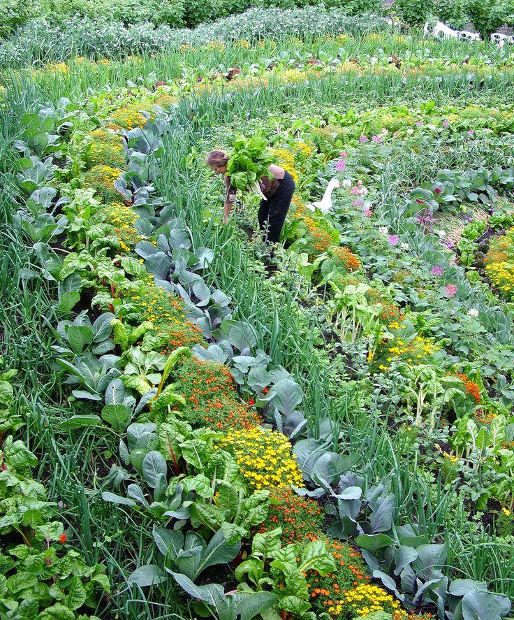 блохи каталог овощей на посадку с фото название