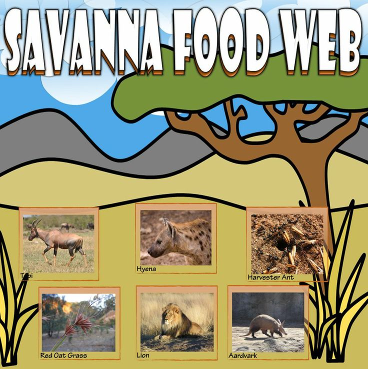 Bring the Savanna to your classroom with this card sort