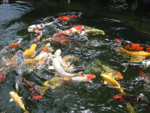 Aquatic Plant Suppliers