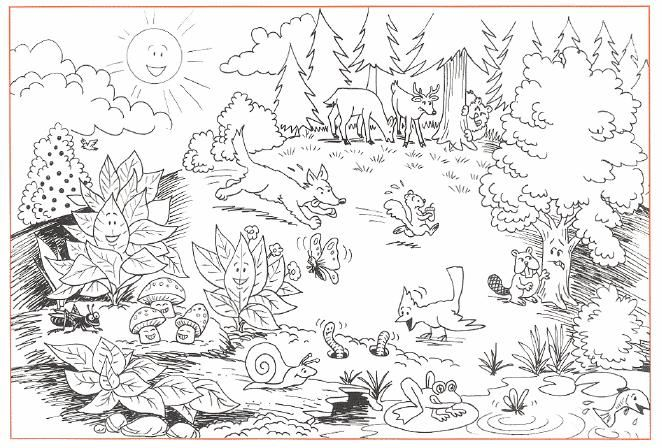 Forest Coloring Pages - Coloring Home | 448x662