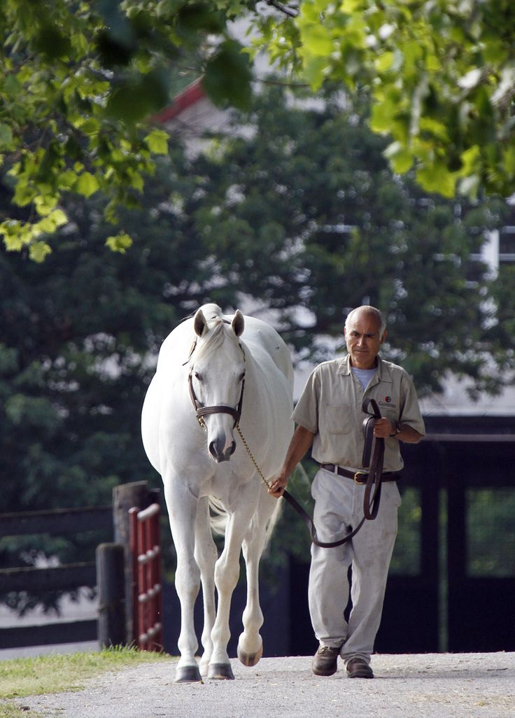 Tapit Gainesway Farm Lexington, KY