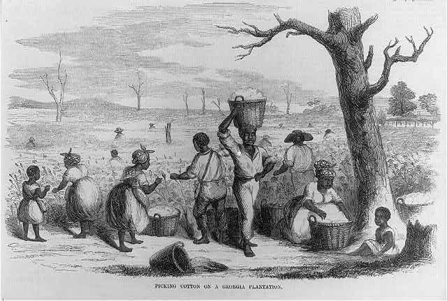 Slaves Picking Cotton Black History Pinterest Cotton