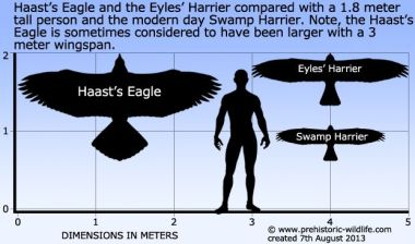 Image result for haast eagle compared to human