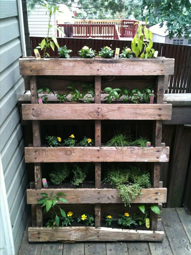 DIY Vertical Garden with Pallet...perfect for herbs