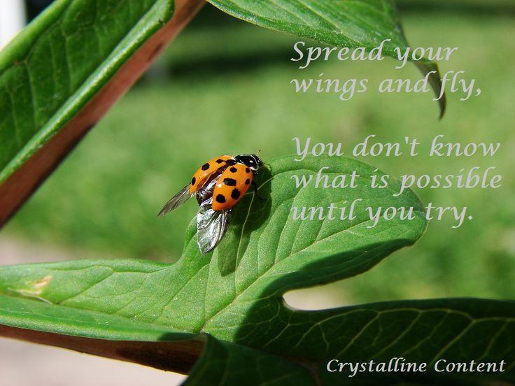 Ladybug Quotes Quotesgram