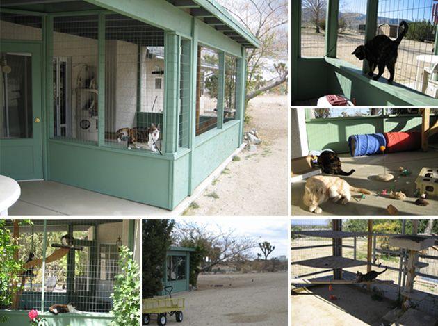 40 Best Images About Outdoor Cat Enclosure On Pinterest