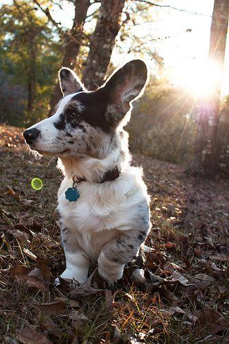 Cutest Puppy Top Breeds 5
