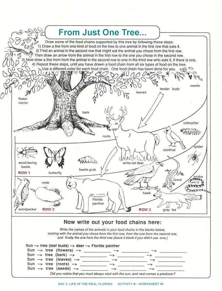 worksheets for kids Archbold Biological