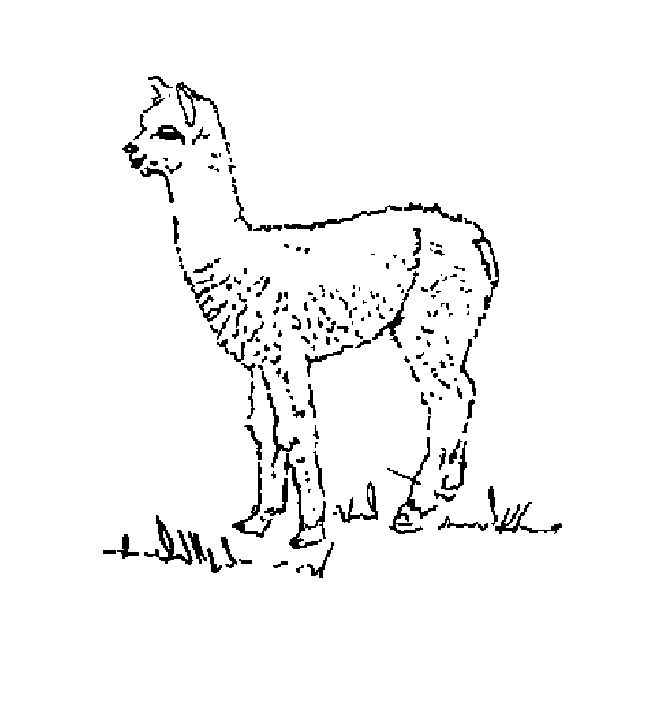 alpaca coloring pages printable  coloring pages