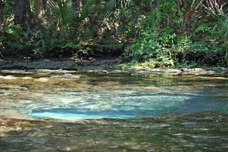 Chassahowitzka River Florida (Spring with underwater
